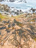 Extraction And Drying Process Of Seaweed, On The Chilean Coast Of The Pacific Ocean, From The Small  poster