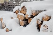 Felled Trees Under The Snow. Raw Materials For The Woodworking Industry. Wood Storage In The Open Ai poster