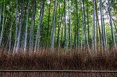 Arashiyama Bamboo Forest In Kyoto Japan poster