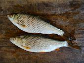Fish Rudd On Board