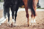 Two Horses, A Black One And A Sorrel One With Long Tails And Riders In Their Saddles, Are Slowly Mov poster