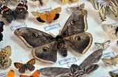 Butterfly Insectarium