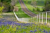 Bluebonnets ao longo do lado da estrada no Texas