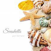 Colorful Seashells On Sand