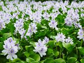 Flower Marsh
