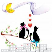 Cats_ Love