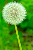 pic of peculiar  - peculiar round and symmetric flower in green meadow - JPG