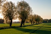 stock photo of ash-tree  - Parkway with ash trees on a late evening at springtime in the Swedish countryside of Vikbolandet in Ostergotland - JPG