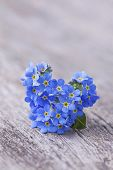 Forgetmenot Flowers