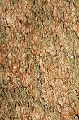 Tree Bark Close Up Natural Background Texture