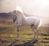 foto of herd horses  - White horse - JPG