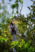 Cormorant bird ,Everglades NP,Florida