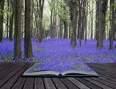 stock photo of harebell  - Creative concept pages of book Beautiful carpet of bluebell flowers in Spring forest landscape - JPG