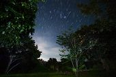 Green garden with trees at night with star trails in the sky