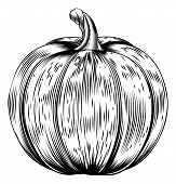 picture of lithographic  - A vintage retro woodcut print or etching style pumpkin illustration - JPG