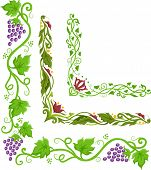 Corner Border Illustration of Grapevines Crawling in L-Shaped Patterns