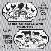 stock photo of poultry  - Farm animals and poultry on background with farm - JPG