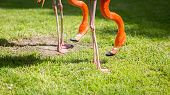 Flamingo Legs And Head