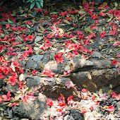 Azalea Fall On The Ground