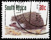 Postage Stamp South Africa 1998 Southern African Hedgehog, Anima