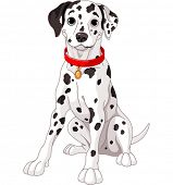 stock photo of spotted dog  - Illustration of a cute Dalmatian dog wearing a red collar - JPG