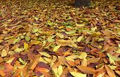 Carpet Of Autumn Leaves