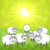 Vector cartoon illustration of sheep in the meadow