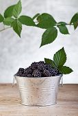 Blackberries In Small Bucket