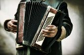 image of accordion  - The musician playing the accordion - JPG