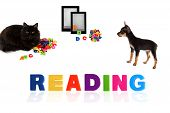 Black cat and toy-terrier puppy with electronic book