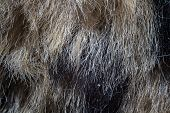 Photo of the fake fur