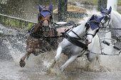 Two Horses Running Through Water.