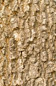 Bark Of Tree Seamless Tileable Texture