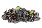 stock photo of aronia  - cluster black aronia  - JPG