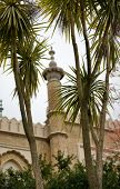 Low Angle View of Tropical Foliage and Architecture in Brighton Pavilion Gardens