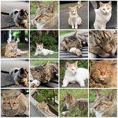 Undomesticated cat cat in urban city.
