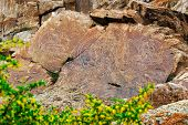 Petroglyphs (rock paintings) of Buddha in Kazakhstan