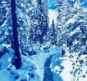 Winter season in  forest