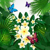 Floral design background. Plumeria flowers, tropical leaves and butterflies.