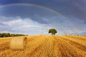 Field of hay, bales. Rainbow in the sky