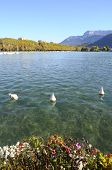 Lake Of Annecy And Mountains, In France
