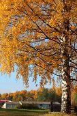 Countryside Landscape, Yellow Autumn Tree