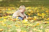 Cute Little Baby Playing With Yellow Leafs In Autumn Park