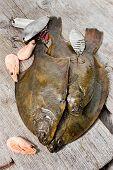 Fresh Flounder