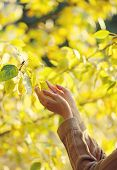 Autumn, Nature, Ecology And People - Concept