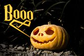Boo Halloween Scary Pumpkin In The Dark Brushwood