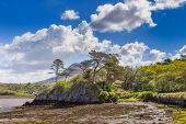 stock photo of galway  - Rocky island with trees in Letterfrack in County Galway - JPG