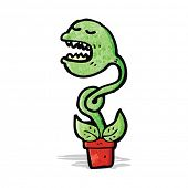 picture of carnivorous plants  - cartoon carnivorous plant - JPG