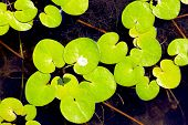 driftweeds leafs on water surface - abstract natural background