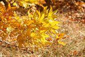 Beautiful autumn background